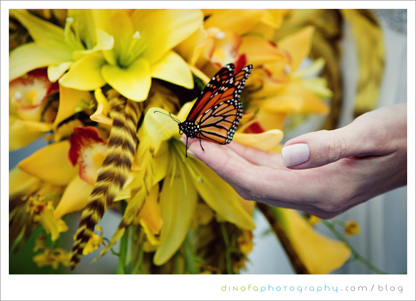 Wild Monarch Butterfly little mellow yellow wedding | chrissy+kevin