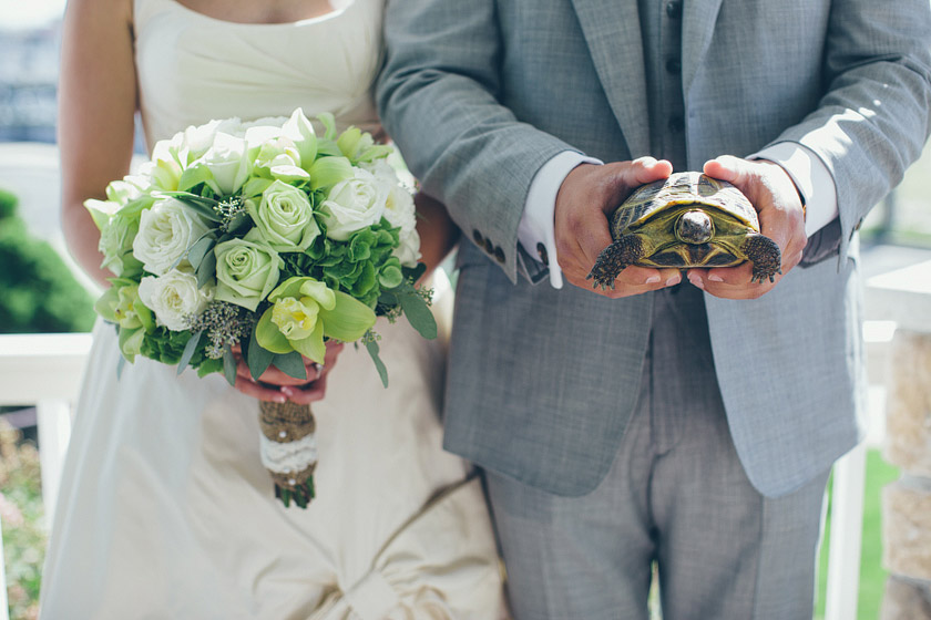 turtle at wedding3 a look back | 2012 weddings